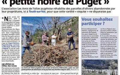 Une nouvelle oliveraie à Touët-sur-Var à Le Tournel